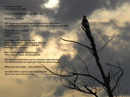 """the secret life of crows"" by the poet scanlon"